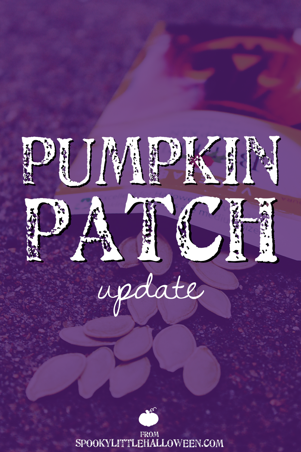 I'm growing my own backyard pumpkin patch for Halloween! Here's a peek at the first six weeks of progress in my little patch.